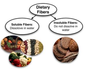 how-dietary-fiber-helps-our-digestive-system