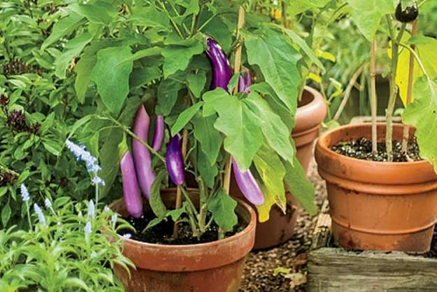 How to Grow Your Own Food in Containers